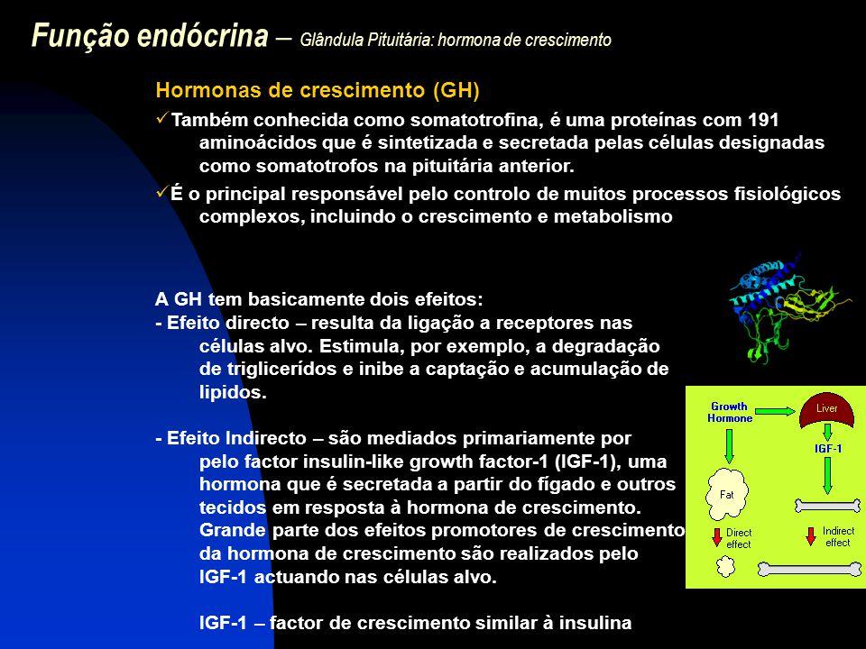 Função endócrina – Glândula Pituitária: hormona de crescimento Hormonas de crescimento (GH) Também conhecida como somatotrofina, é uma proteínas com 1