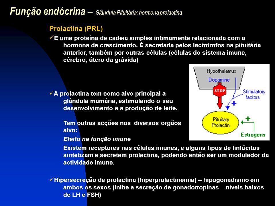 Função endócrina – Glândula Pituitária: hormona prolactina Prolactina (PRL) É uma proteína de cadeia simples intimamente relacionada com a hormona de