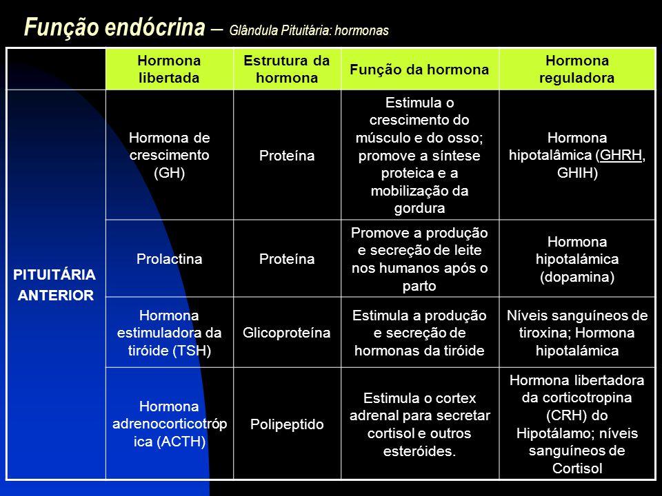 Função endócrina – Glândula Pituitária: hormonas Hormona libertada Estrutura da hormona Função da hormona Hormona reguladora PITUITÁRIA ANTERIOR Hormo
