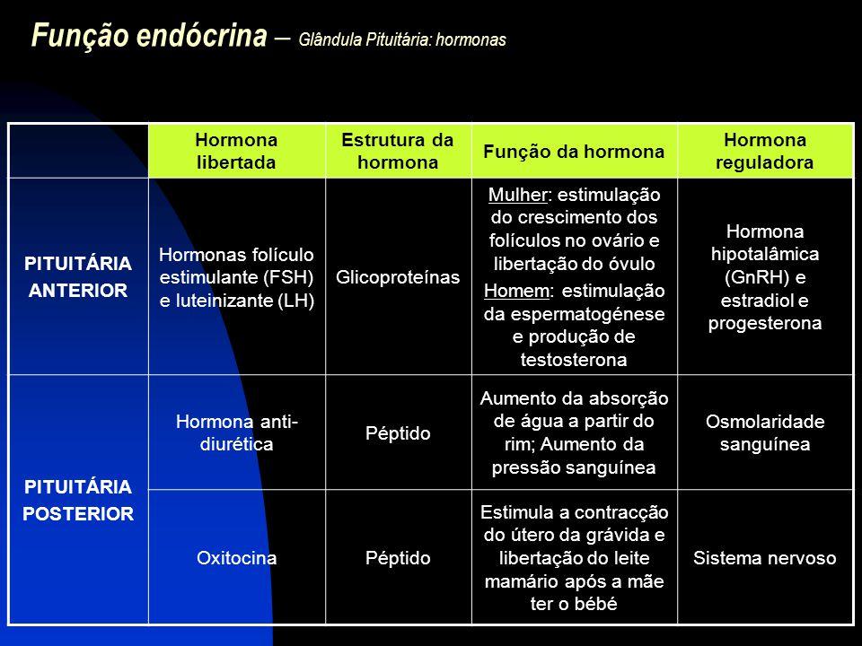 Função endócrina – Glândula Pituitária: hormonas VARIAÇÃO DAS CONCENTRAÇÕES DAS HORMONAS: - Ritmos circadianos: prolactina, GH e corticotropina (geralmente atingem o máximo um pouco antes do despertar e baixa para níveis mínimos um pouco antes da hora de dormir) - Ciclo menstrual: FSH e LH A secreção excessiva ou insuficiente de um ou mais hormonas acarreta uma ampla gama de sintomas.