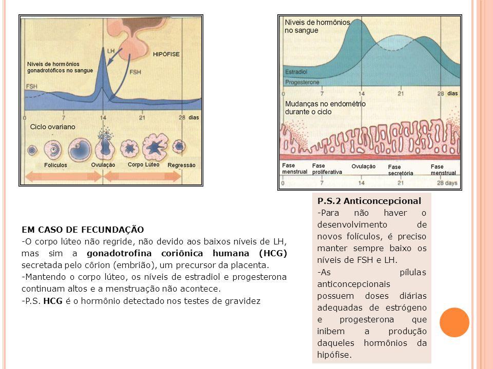 CICLO MENSTRUAL Resumo: Fase folicular - FSH estimula o desenvolvimento dos folículos, mas somente um atinge a maturidade (folículo de Graaf). Fase pr