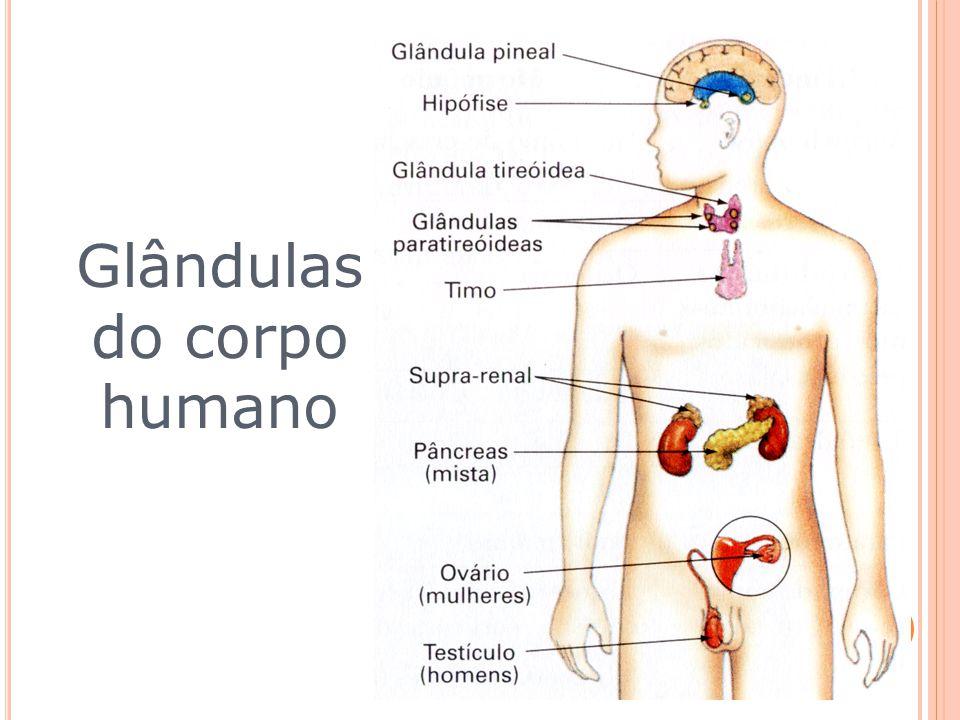 O sistema endócrino é formado pelo conjunto de glândulas endócrinas,as quais são responsáveis pela secreção de substâncias denominadas, genericamente,