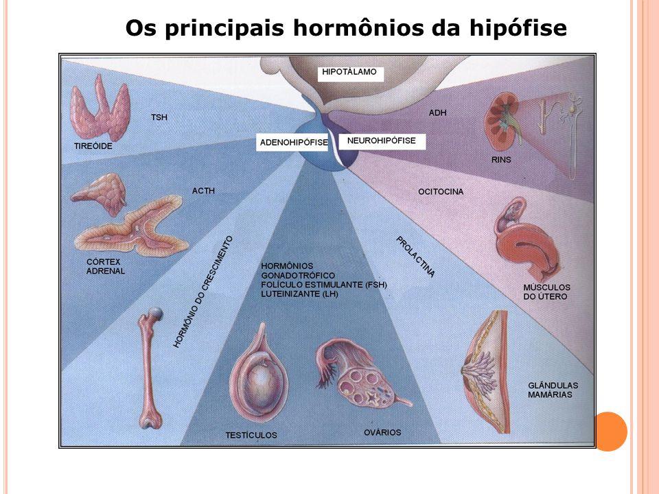 MECANISMO DE AÇÃO HORMONAL-Peptídios -> Hormônios da hipófise ->Hormônio da medula da adrenal: adrenalina e noradrenalina -> Insulina e glucagon -> CO