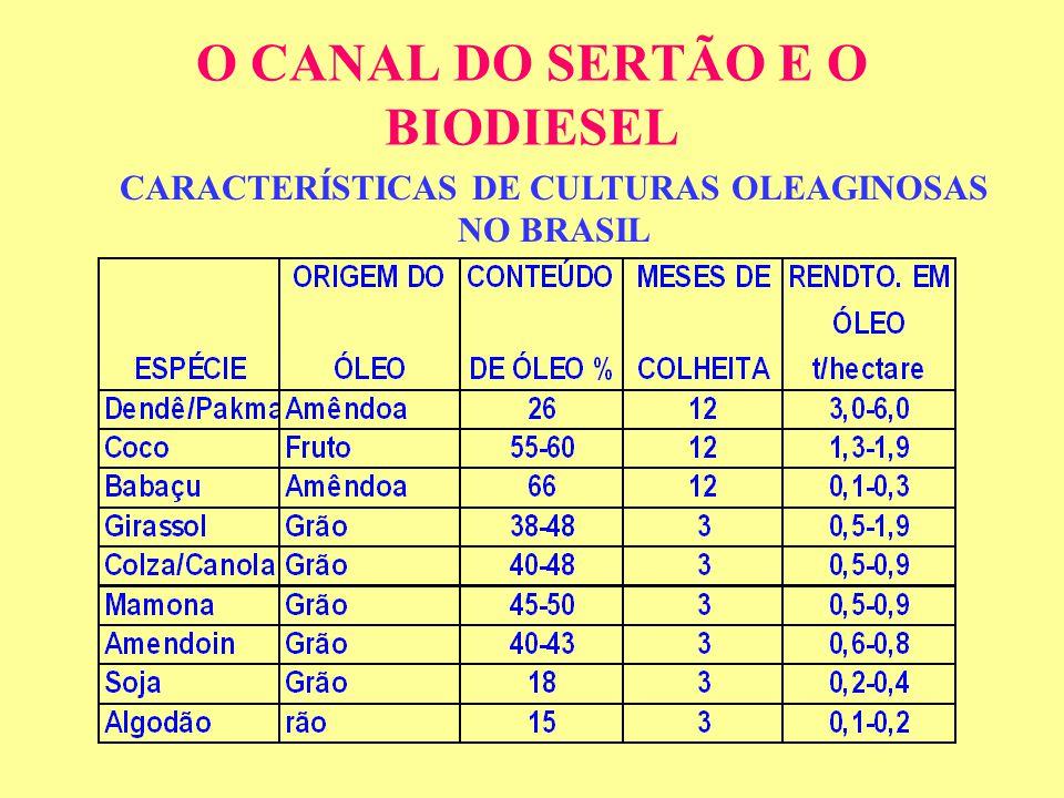 O CANAL DO SERTÃO E O BIODIESEL CARACTERÍSTICAS DE CULTURAS OLEAGINOSAS NO BRASIL