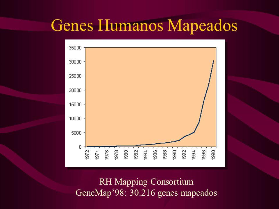 Genes Humanos Mapeados RH Mapping Consortium GeneMap'98: 30.216 genes mapeados