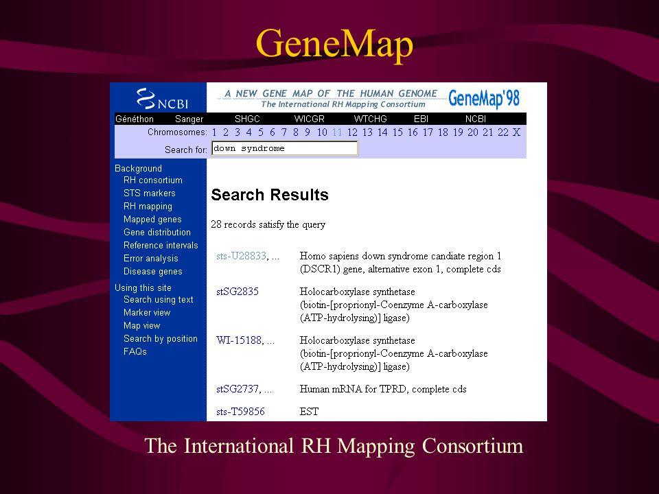 GeneMap The International RH Mapping Consortium