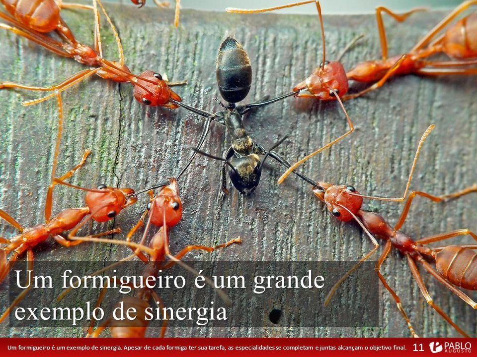 Um formigueiro é um exemplo de sinergia.