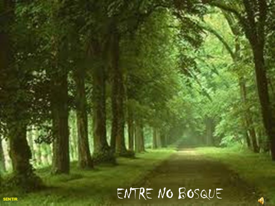 ENTRE NO BOSQUE SENTIR