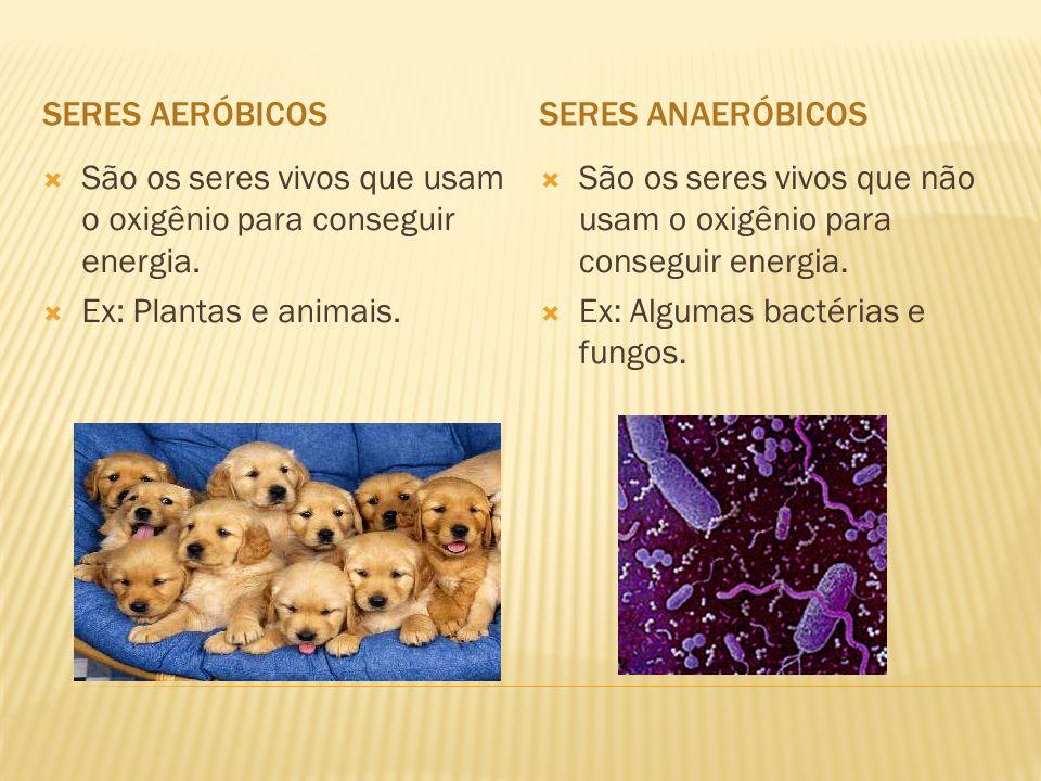 SERES AERÓBICOSSERES ANAERÓBICOS  São os seres vivos que usam o oxigênio para conseguir energia.