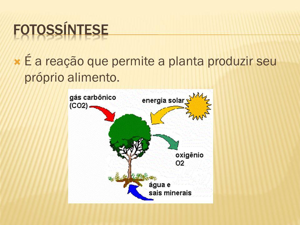  É a reação que permite a planta produzir seu próprio alimento.