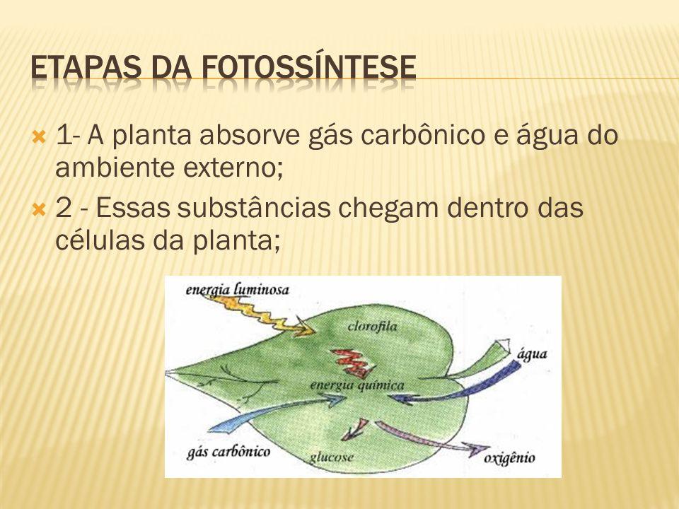  1- A planta absorve gás carbônico e água do ambiente externo;  2 - Essas substâncias chegam dentro das células da planta;