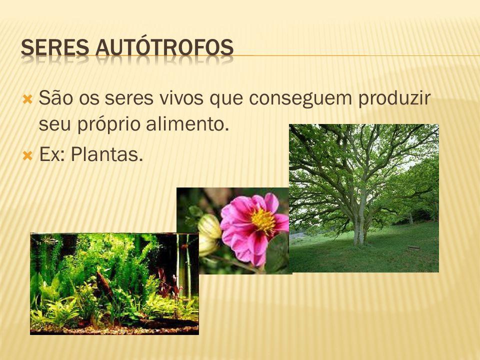  São os seres vivos que conseguem produzir seu próprio alimento.  Ex: Plantas.