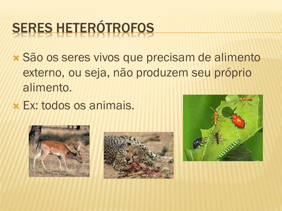  São os seres vivos que precisam de alimento externo, ou seja, não produzem seu próprio alimento.