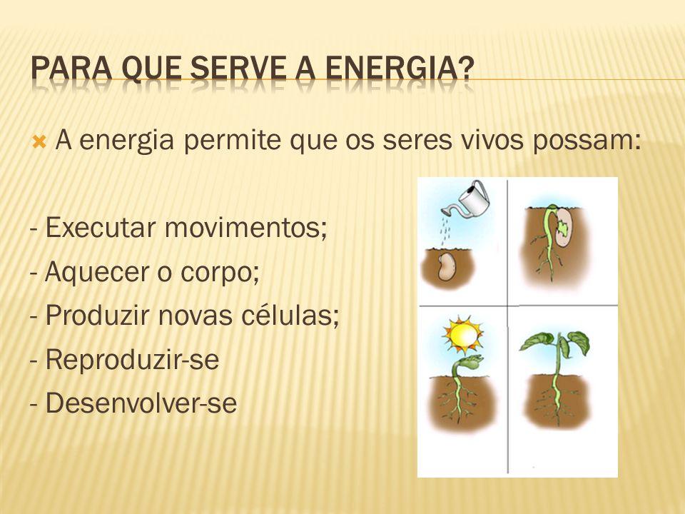  A energia permite que os seres vivos possam: - Executar movimentos; - Aquecer o corpo; - Produzir novas células; - Reproduzir-se - Desenvolver-se