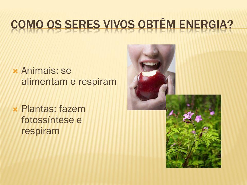  Animais: se alimentam e respiram  Plantas: fazem fotossíntese e respiram
