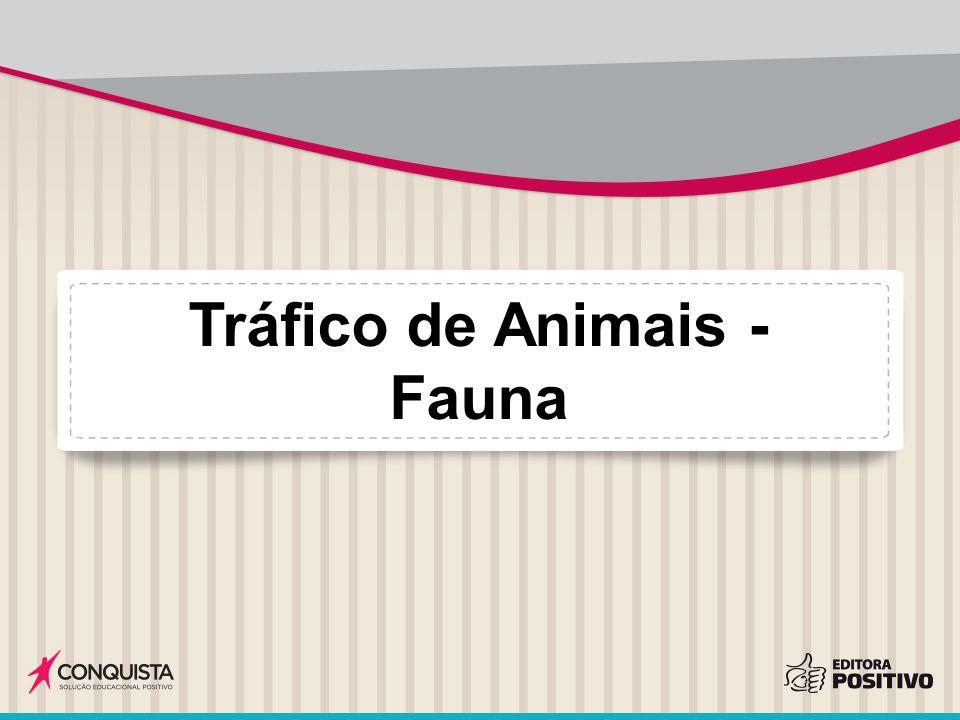 Tráfico de Animais - Fauna