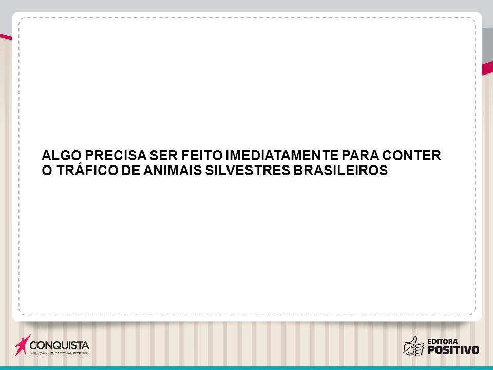 ALGO PRECISA SER FEITO IMEDIATAMENTE PARA CONTER O TRÁFICO DE ANIMAIS SILVESTRES BRASILEIROS