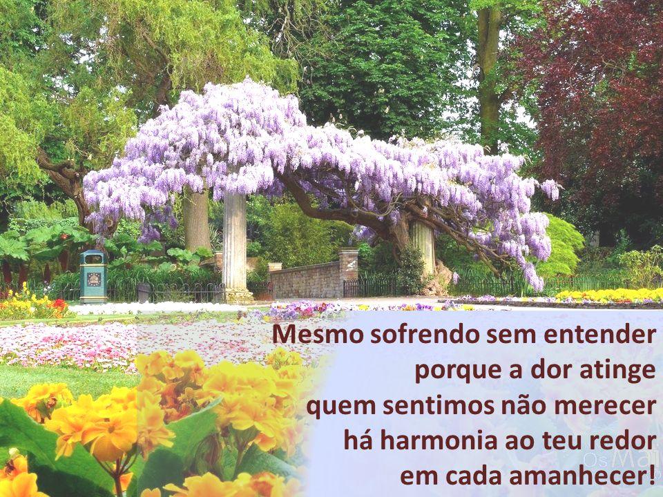 Mesmo sofrendo sem entender porque a dor atinge quem sentimos não merecer há harmonia ao teu redor em cada amanhecer!
