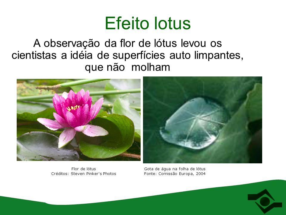 Efeito lotus A observação da flor de lótus levou os cientistas a idéia de superfícies auto limpantes, que não molham Flor de lótus Créditos: Steven Pi