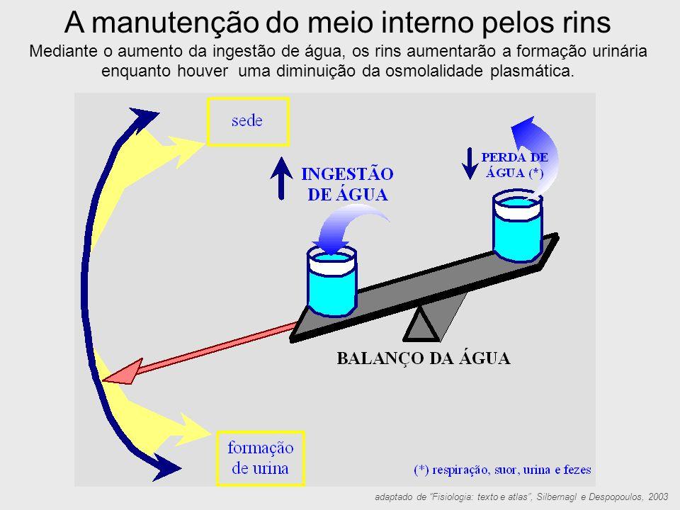 """adaptado de """"Fisiologia: texto e atlas"""", Silbernagl e Despopoulos, 2003 A manutenção do meio interno pelos rins Mediante o aumento da ingestão de água"""