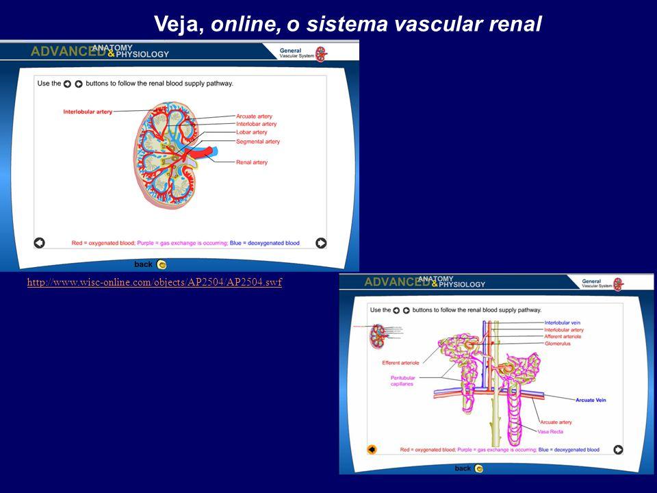Veja, online, o sistema vascular renal http://www.wisc-online.com/objects/AP2504/AP2504.swf