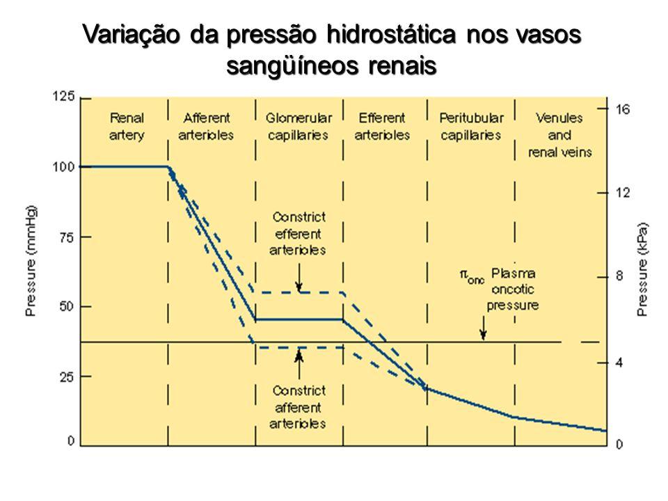 Variação da pressão hidrostática nos vasos sangüíneos renais