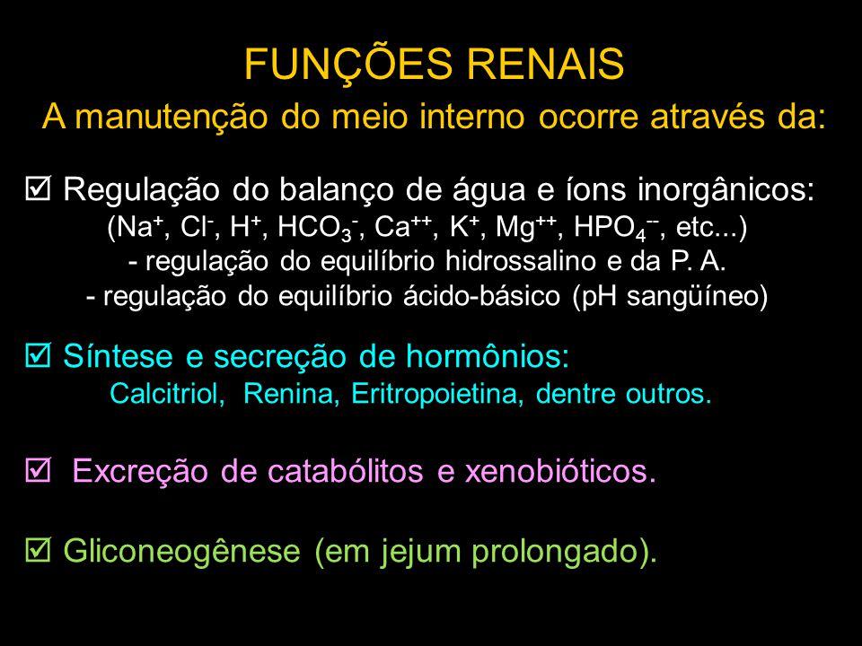  Regulação do balanço de água e íons inorgânicos: (Na +, Cl -, H +, HCO 3 -, Ca ++, K +, Mg ++, HPO 4 --, etc...) - regulação do equilíbrio hidrossal