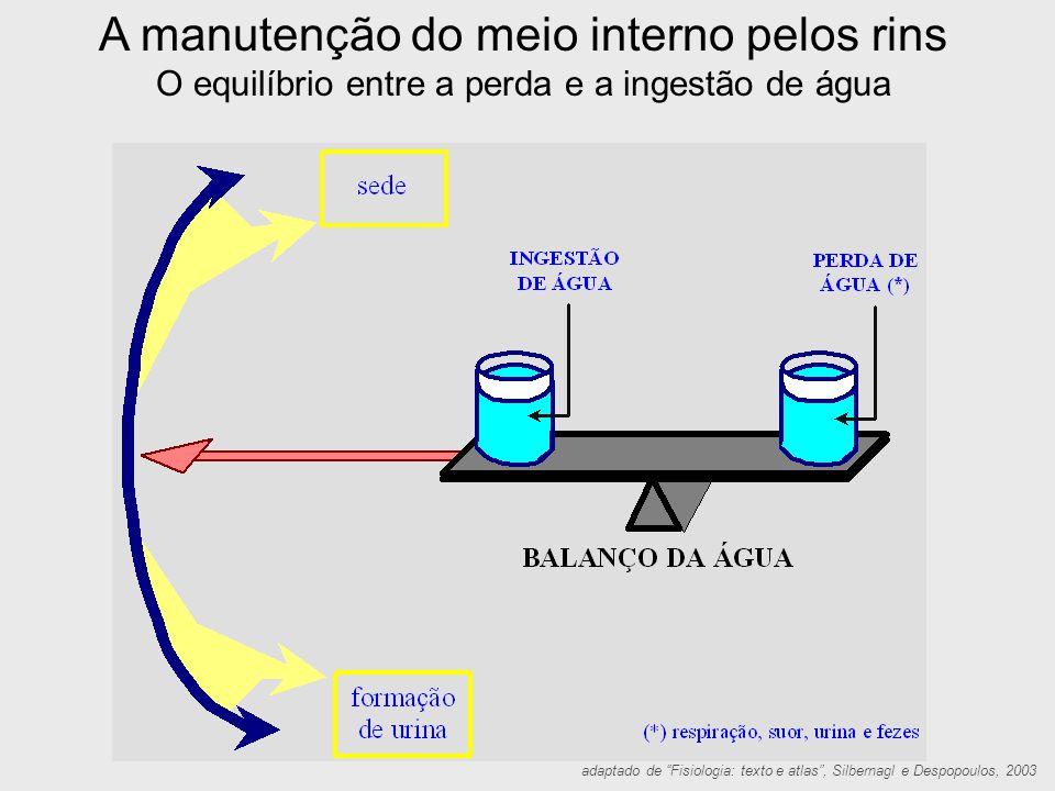 A manutenção do meio interno pelos rins Quando ocorre um aumento da ingestão de água, os rins aumentam a formação urinária.