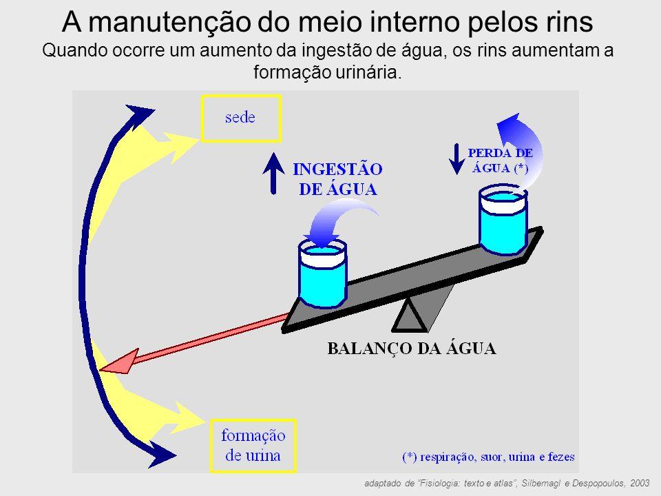 """A manutenção do meio interno pelos rins Quando ocorre um aumento da ingestão de água, os rins aumentam a formação urinária. adaptado de """"Fisiologia: t"""