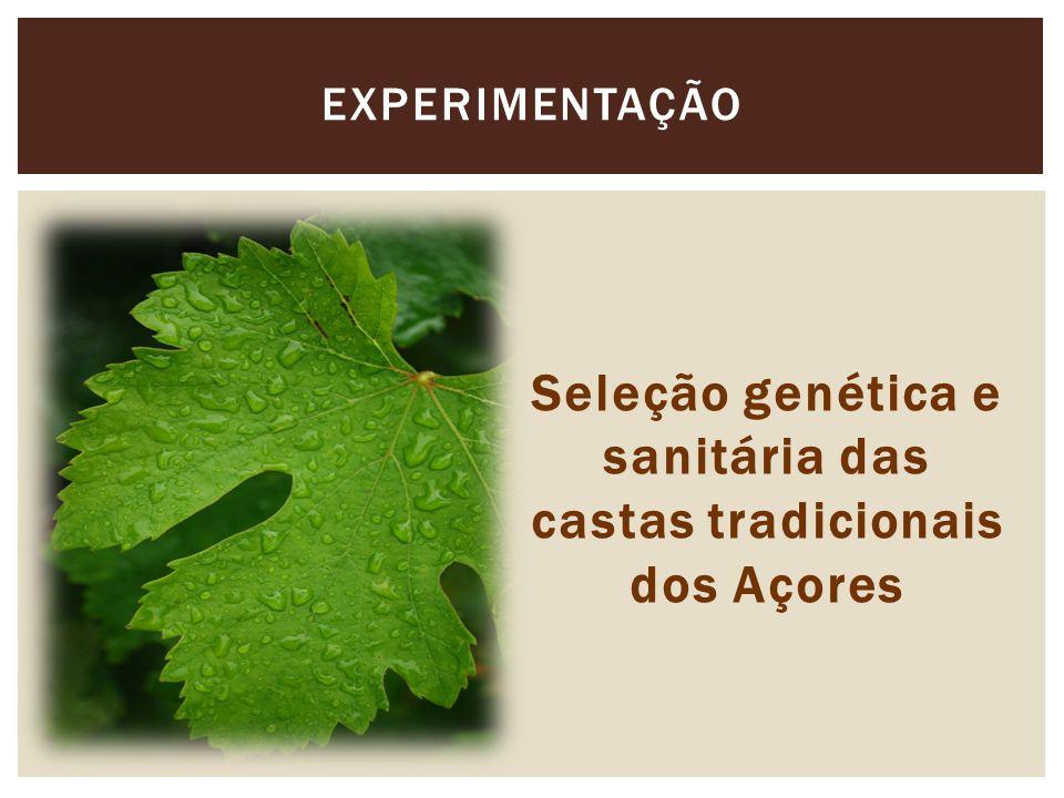 Seleção genética e sanitária das castas tradicionais dos Açores EXPERIMENTAÇÃO