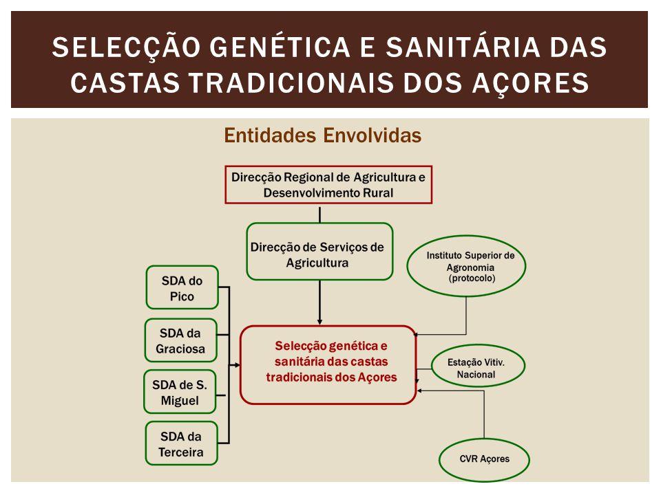 SELECÇÃO GENÉTICA E SANITÁRIA DAS CASTAS TRADICIONAIS DOS AÇORES Entidades Envolvidas