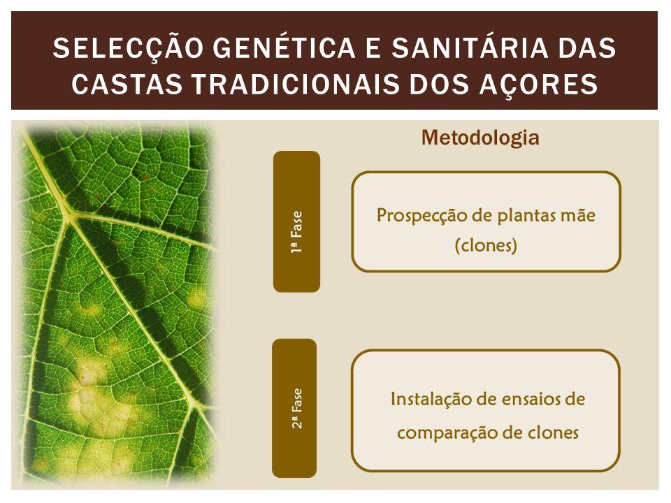 SELECÇÃO GENÉTICA E SANITÁRIA DAS CASTAS TRADICIONAIS DOS AÇORES Metodologia