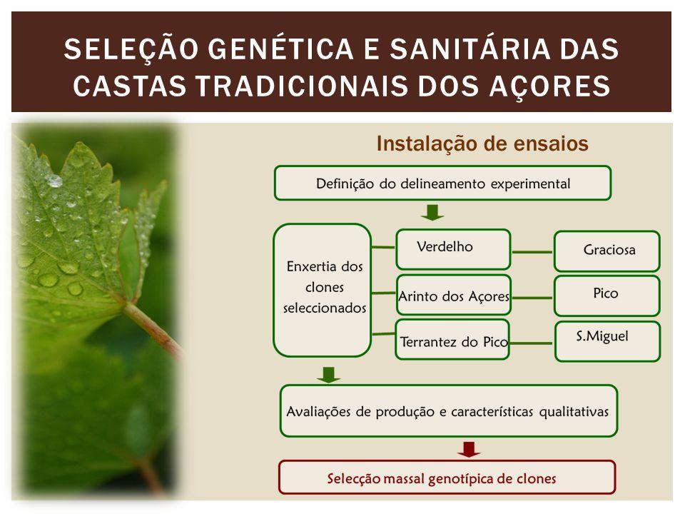 SELEÇÃO GENÉTICA E SANITÁRIA DAS CASTAS TRADICIONAIS DOS AÇORES Instalação de ensaios