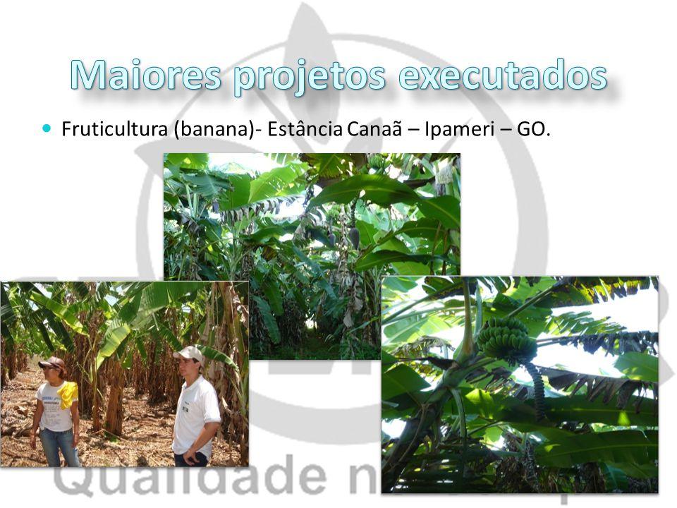 Fruticultura (banana)- Estância Canaã – Ipameri – GO.