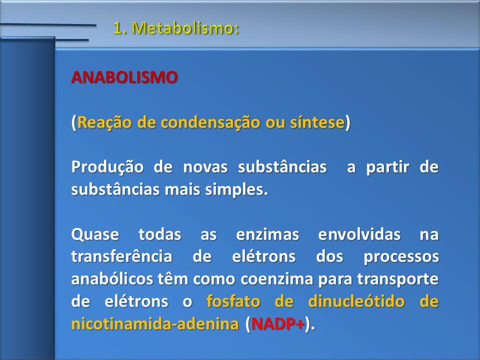 ANABOLISMO (Reação de condensação ou síntese) Produção de novas substâncias a partir de substâncias mais simples.