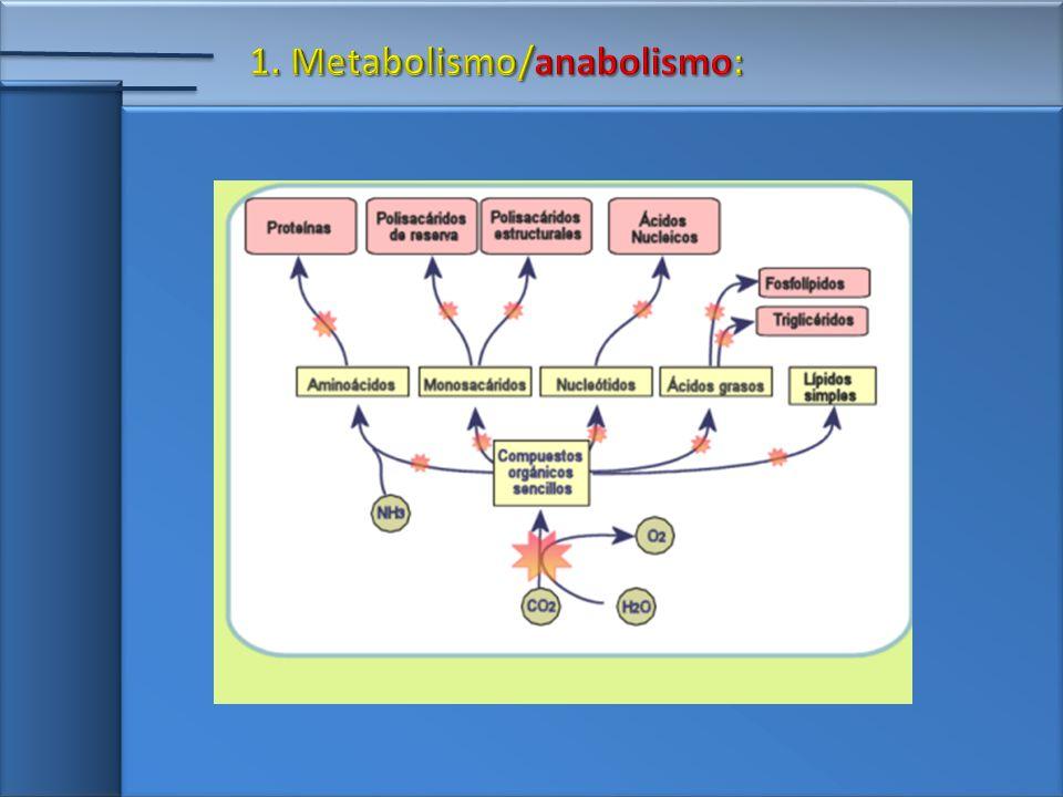 Os polirribossomos são responsáveis pela síntese de proteínas na célula.