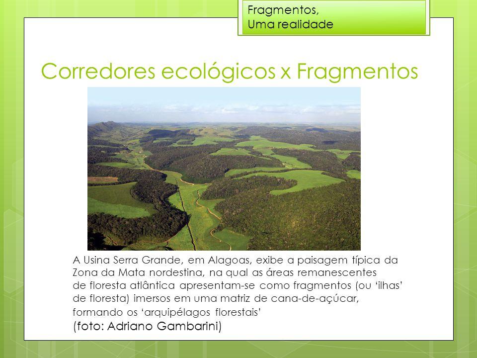 Corredores ecológicos x Fragmentos Fragmentos, Uma realidade A Usina Serra Grande, em Alagoas, exibe a paisagem típica da Zona da Mata nordestina, na qual as áreas remanescentes de floresta atlântica apresentam-se como fragmentos (ou 'ilhas' de floresta) imersos em uma matriz de cana-de-açúcar, formando os 'arquipélagos florestais' (foto: Adriano Gambarini)