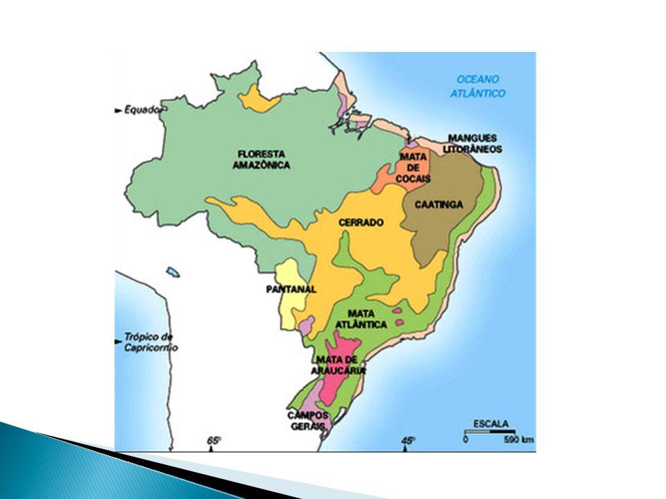  PRINCIPAIS CAUSAS: abertura de estradas; avanço da agropecuária e urbanizaçao.