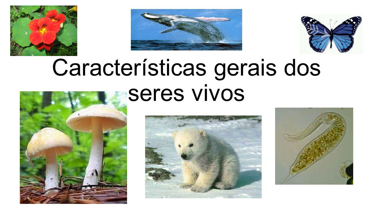 Características gerais dos seres vivos