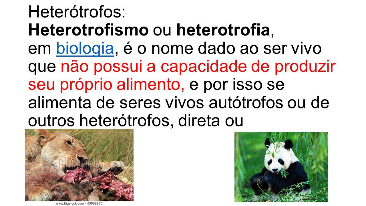Heterótrofos: Heterotrofismo ou heterotrofia, em biologia, é o nome dado ao ser vivo que não possui a capacidade de produzir seu próprio alimento, e por isso se alimenta de seres vivos autótrofos ou de outros heterótrofos, direta ou indiretamente.biologia