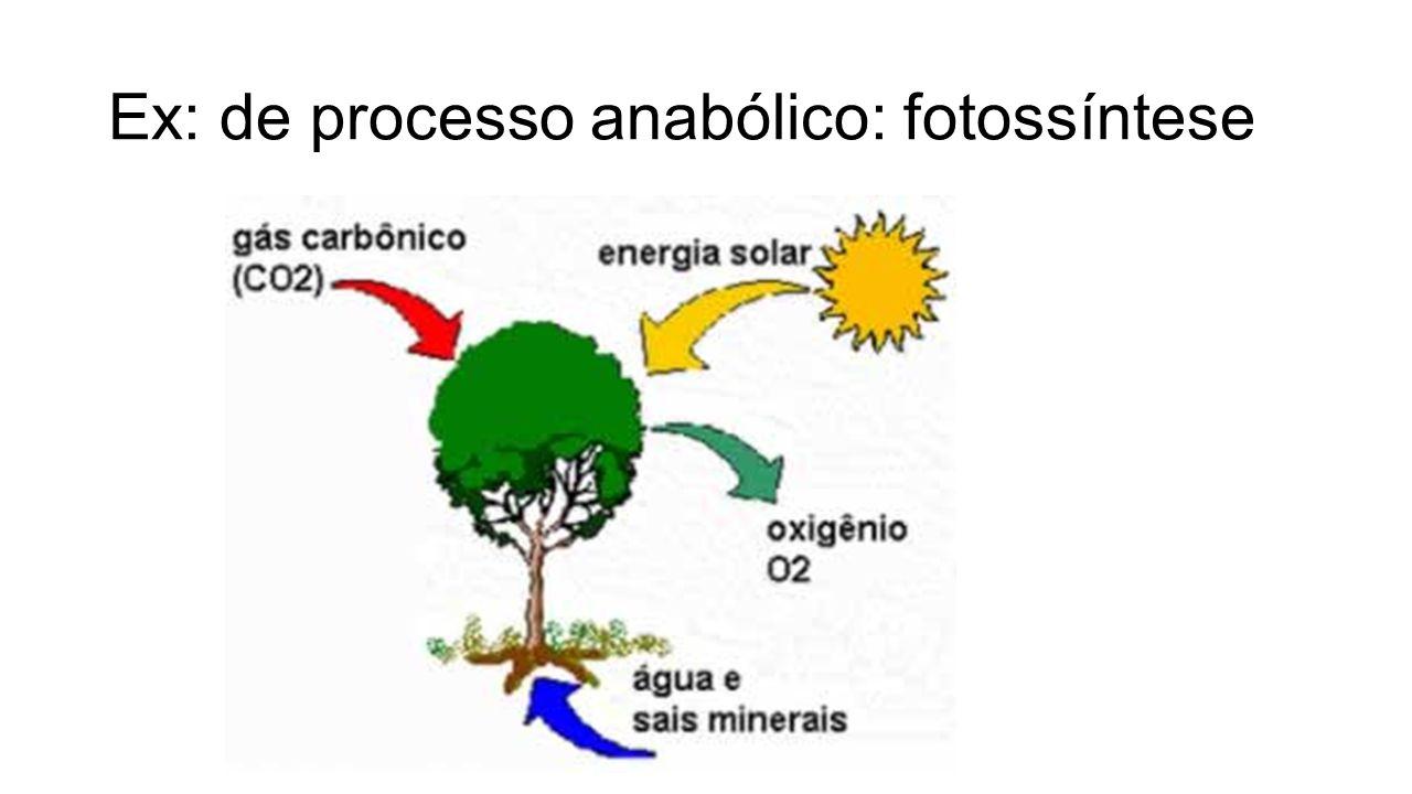 Ex: de processo catabólico: respiração aeróbia