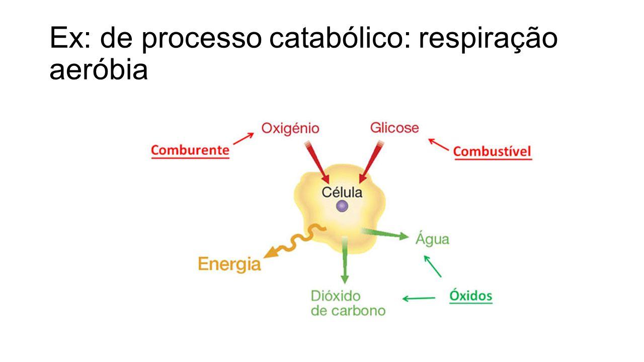 De acordo com a obtenção de energia os seres vivos são classificados em autótrofos ou heterótrofos.