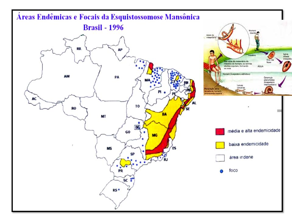 Surto de Doença Meningocócica em Corupá- SC 1997-2002