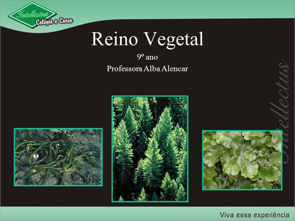 Angiospermas - Nos servem de alimento, ex: arroz, trigo, verduras, etc.