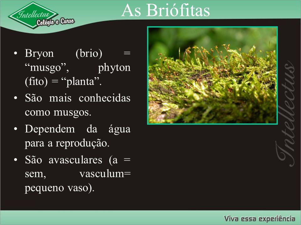 """As Briófitas Bryon (brio) = """"musgo"""", phyton (fito) = """"planta"""". São mais conhecidas como musgos. Dependem da água para a reprodução. São avasculares (a"""