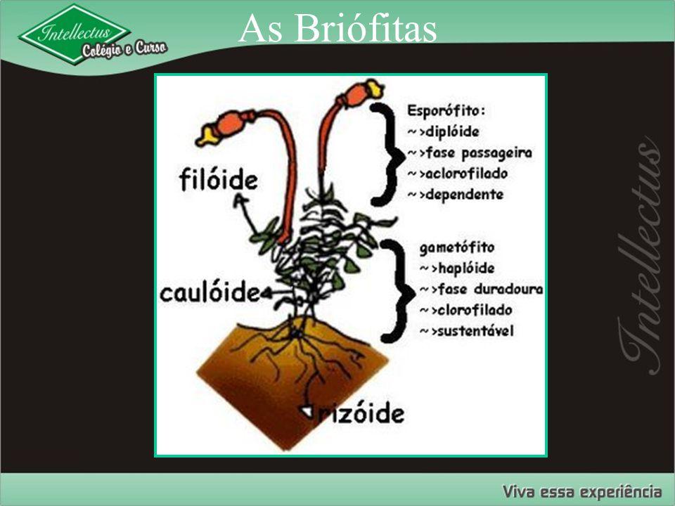 As Briófitas
