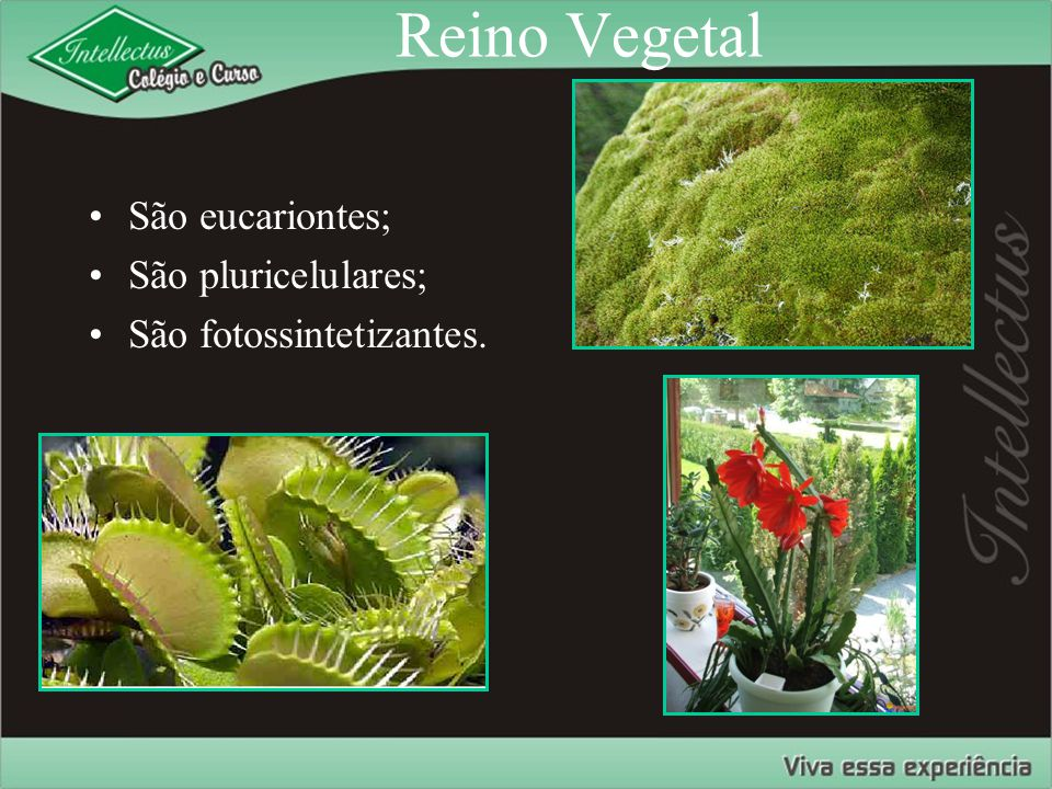 Evolução das plantas Ancestrais protistas Alga verde extinta Plantas sem sementes Briófitas Pteridófitas Angiospermas Gimnospermas Plantas com sementes