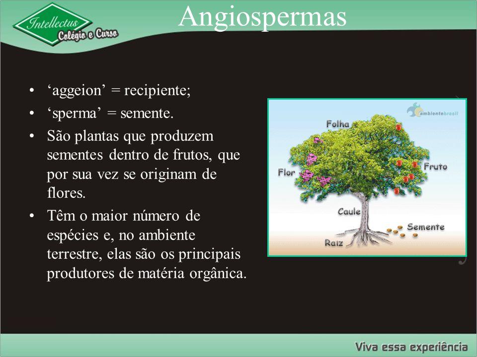 Angiospermas 'aggeion' = recipiente; 'sperma' = semente. São plantas que produzem sementes dentro de frutos, que por sua vez se originam de flores. Tê
