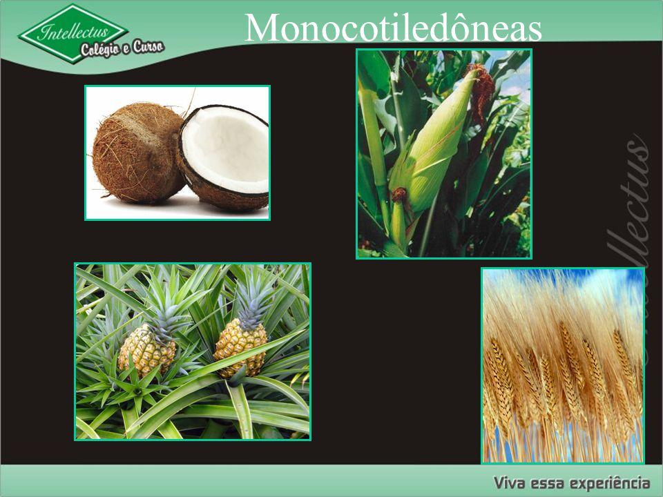Monocotiledôneas