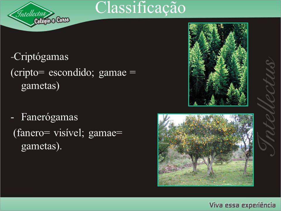 Classificação -Criptógamas (cripto= escondido; gamae = gametas) -Fanerógamas (fanero= visível; gamae= gametas).